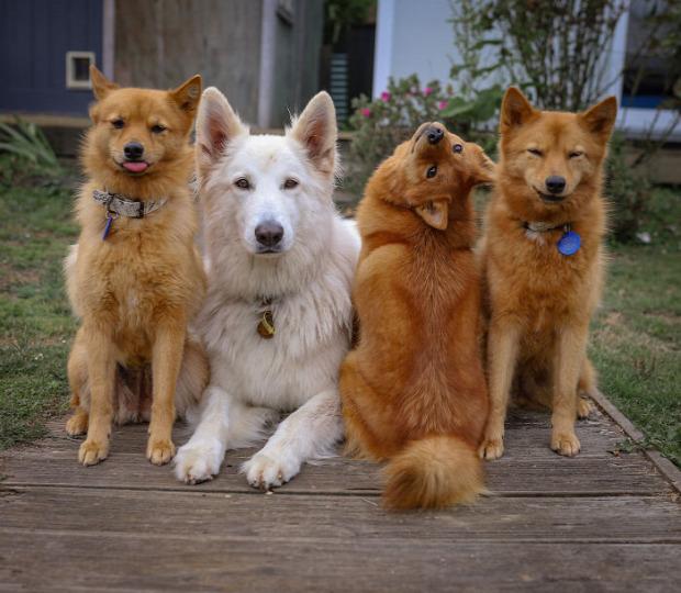 kiko kutya fotó hát fej