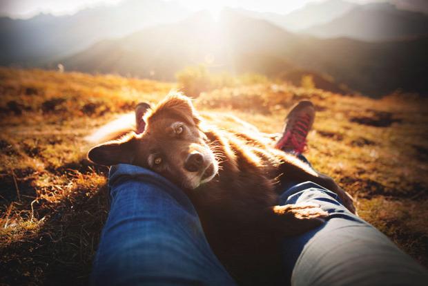 A világ érdekes kutya fotó verseny
