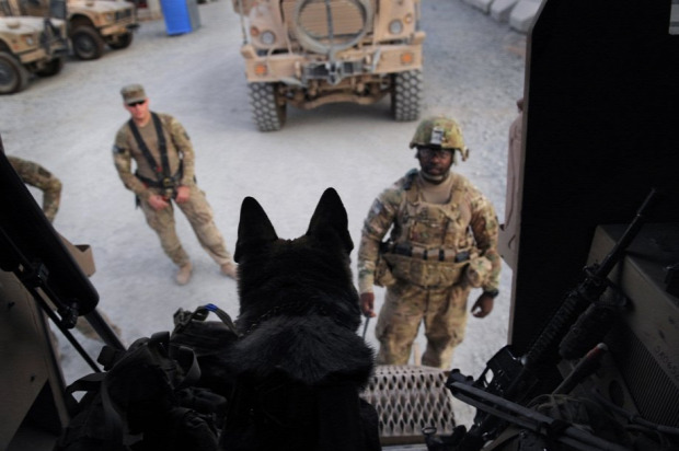 A világ érdekes katona kutya barátság