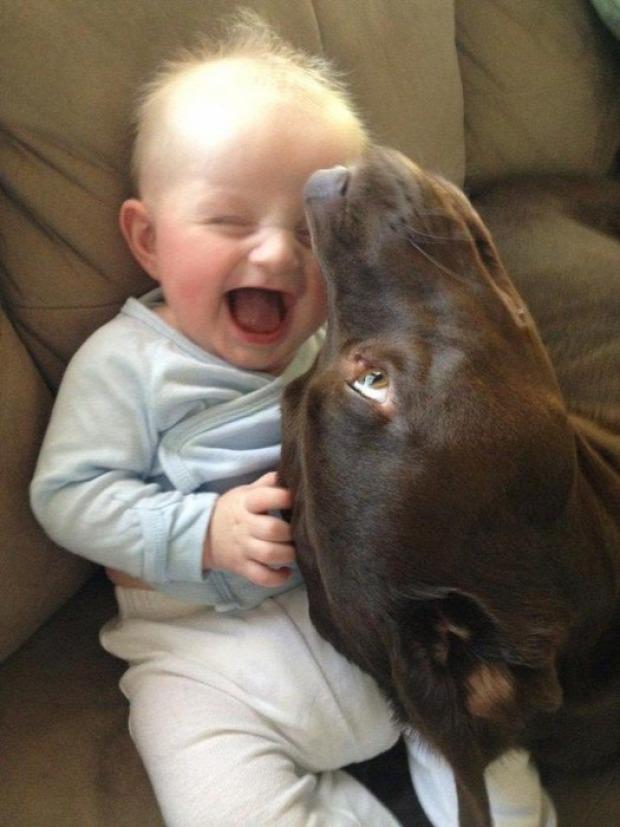 A világ érdekes kutya baba gyerek