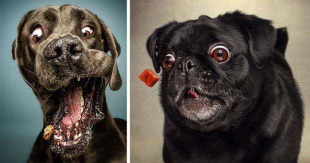 A világ érdekes kutya pofa fej elkap falat