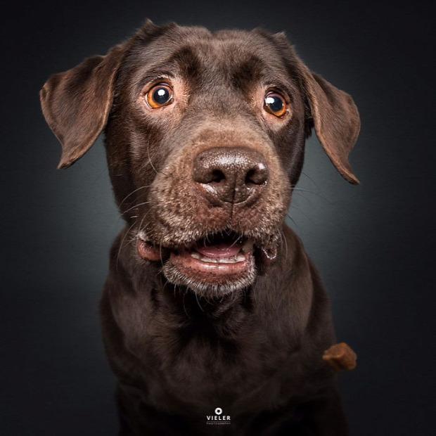 A világ érdekes kutya falat elkapás