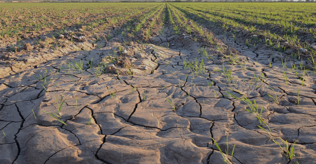 élelmiszer termelés gabona válság jövő krízis