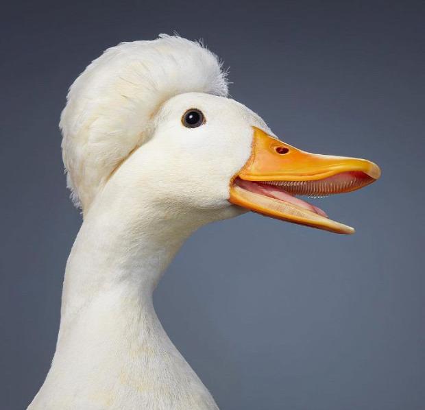 madár portré fotó