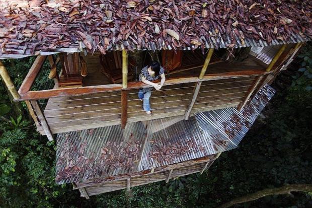 A világ érdekes Costa Rica őserdő dzsungel faház