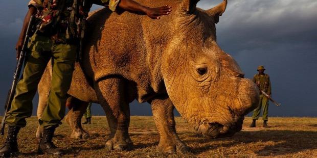 Az isten állatkertje kihalás tömeges hatodik kipusztulás