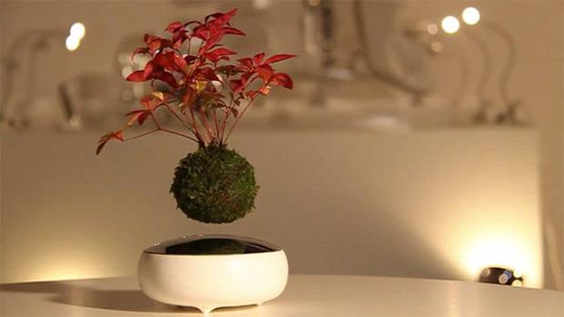 Kütyülógia lebegő bonsai