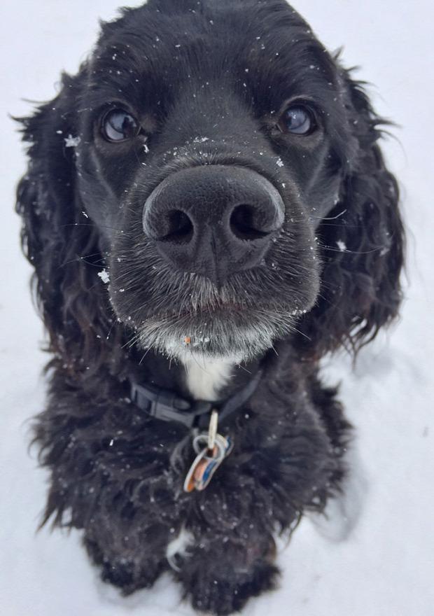 A világ érdekes kölyök kutya hó