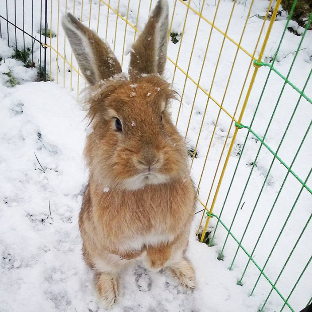 A világ érdekes állat kölyök hó első először találkozás