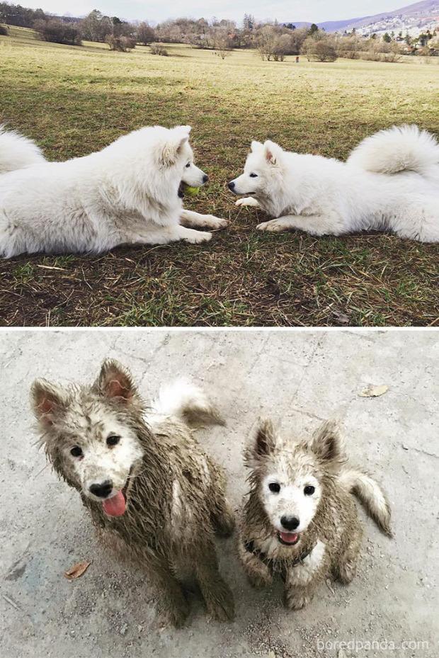 kutya sár játék