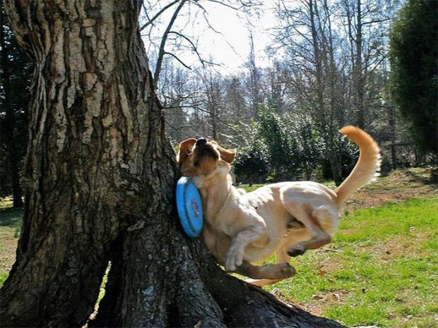 A világ érdekes kutya baki szorult