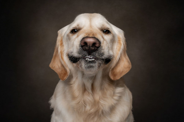 Avilág érdekes állat fotó arc vicces  arckifejezés