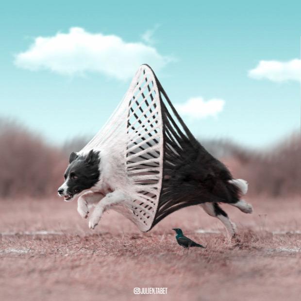 állat photosohop