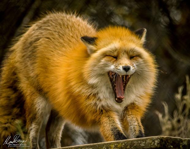 A világ érdekes természetfotós veterán állat