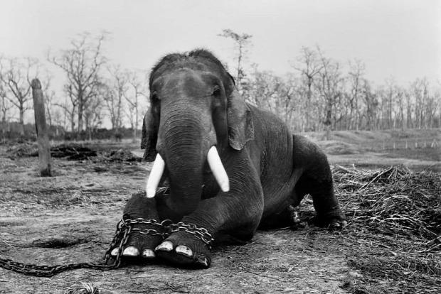 Isten állatkertje vadvilág orvvadász fotós