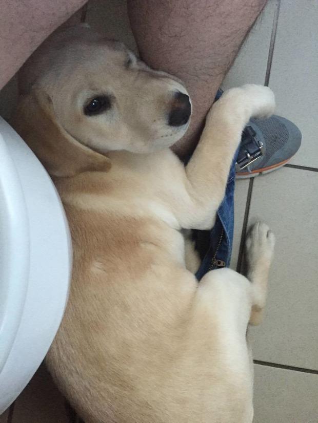 A világ érdekes kutya gatya alsónadrág