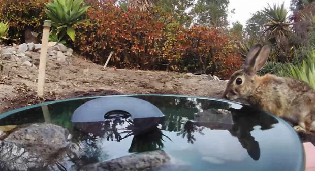 vadállat itató medence kert