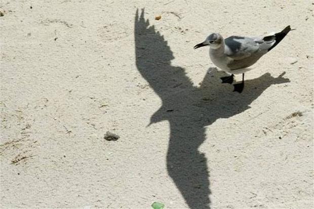 árnyék álom