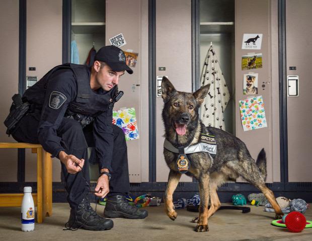 A világ érdekes rendőrség naptár kutya rendőrkutya K9
