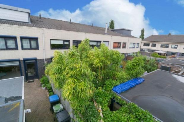 A világ érdekes dzsungel  lakás Hollandia