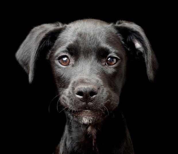 A világ érdekes verseny fotó fotós kutya