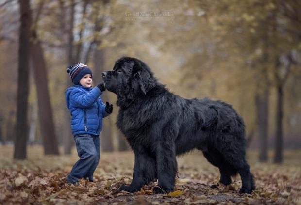 A világ érdekes kutya gyerek Andiseliverstoff