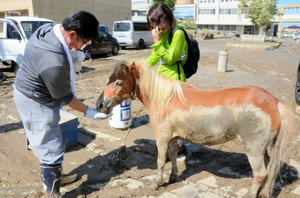 A világ érdekes áradás Japán ló háztető póni