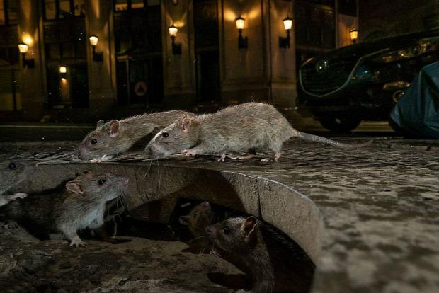 A világ érdekes vad természet vadvilág fotó verseny