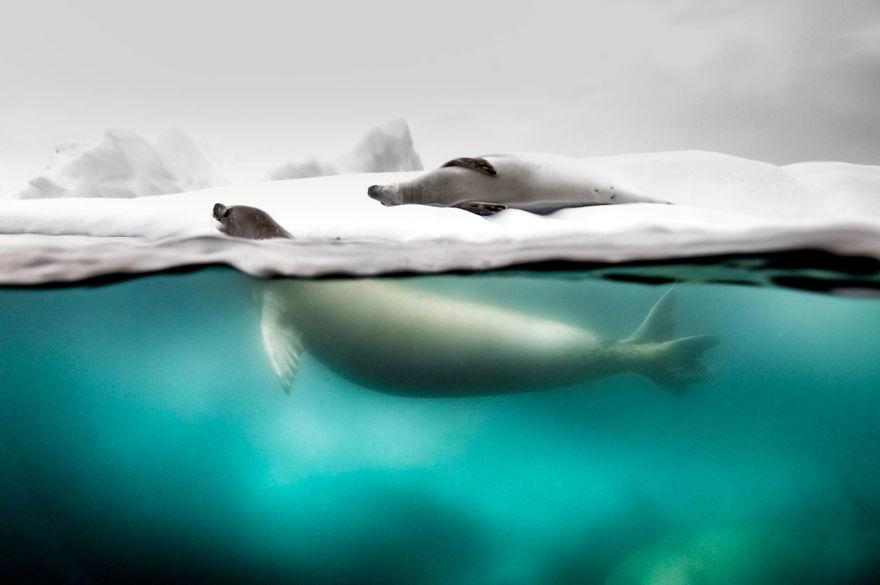A világ érdekes National Geographic fotó verseny
