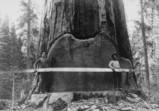 A világ érdekes Amerika USA favágok XIX. század XX. század
