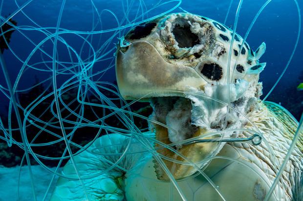 Ocean Art fotóverseny győztes
