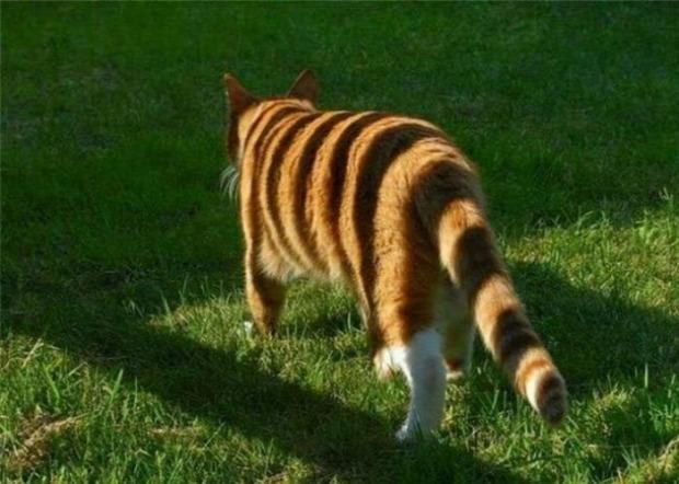 A világ érdekes optikai  illúzió csalóka