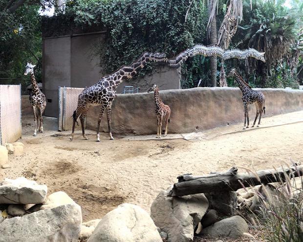 A világ érdekes panoráma fotó állat torz furcsa