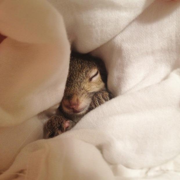 A világ érdekes Jill mókus Louisiana hurrikán