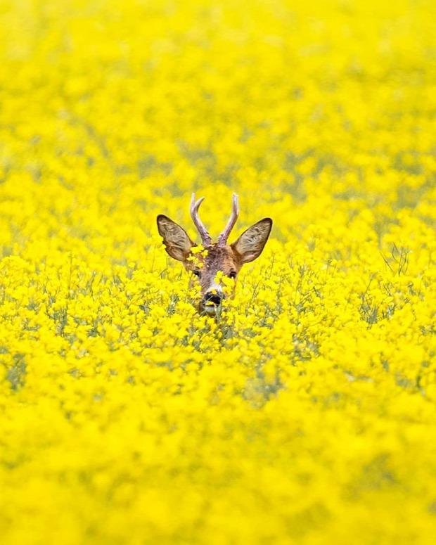 vadállat természet vad