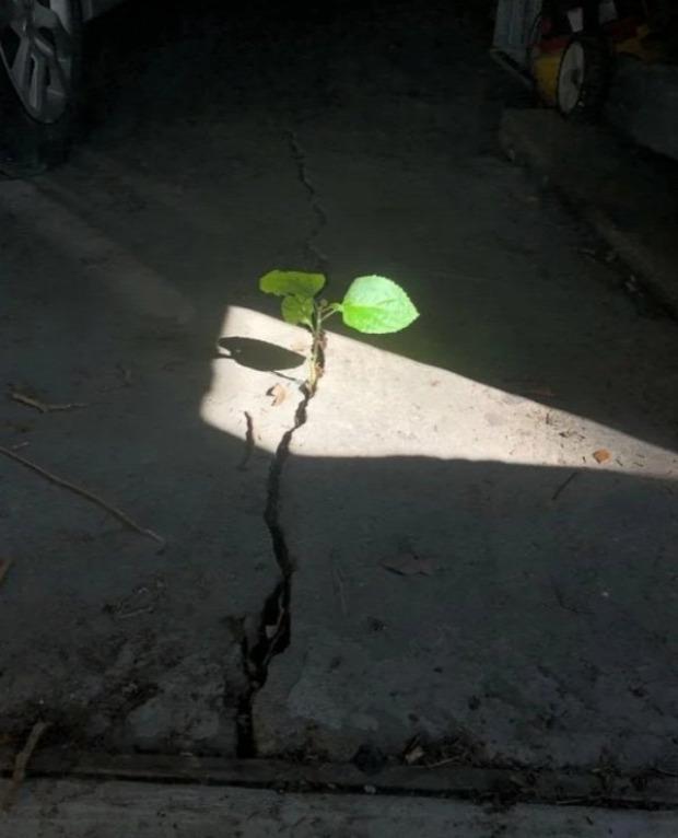 A világ érdekes élet növény