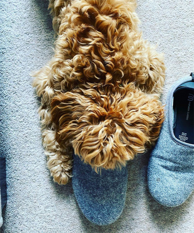 kutya vár gazdi cipő szagol kacsacsőr