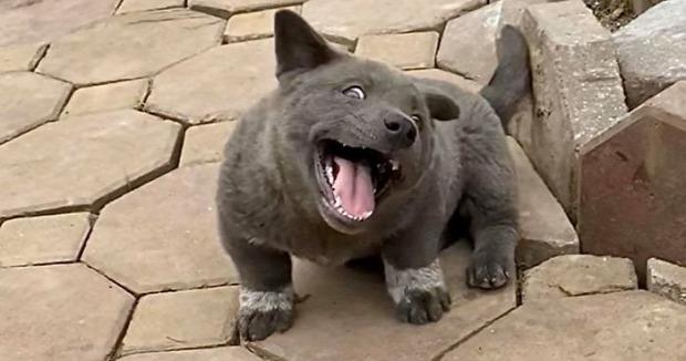 kutya macska hibrid vietnám