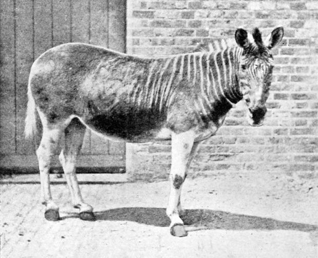 klónozás kihalt állat feltámasztás