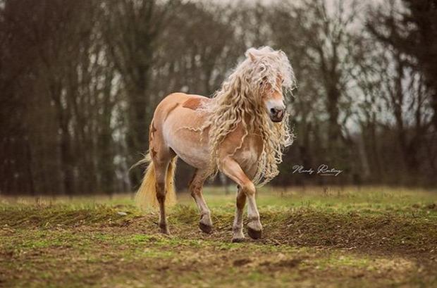 A világ érdekes ló aranyhaj