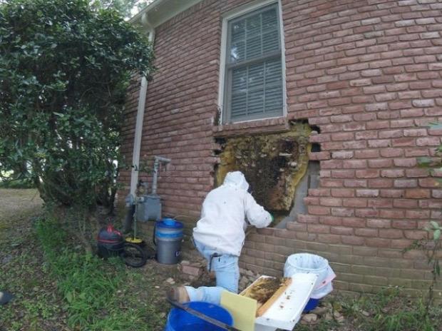 A világ érdekes fal repedés hőkamera szellőző méh kas méz