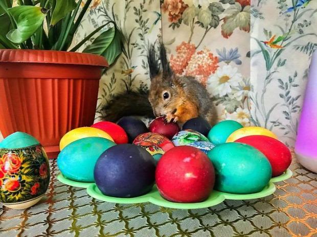 mókus házi mentett