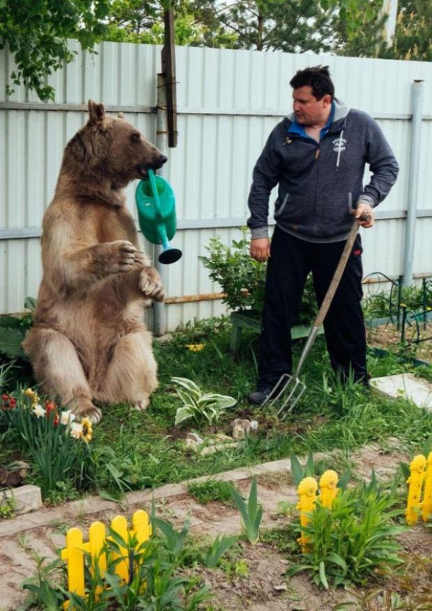 A világ érdekes mackó medve háziállat
