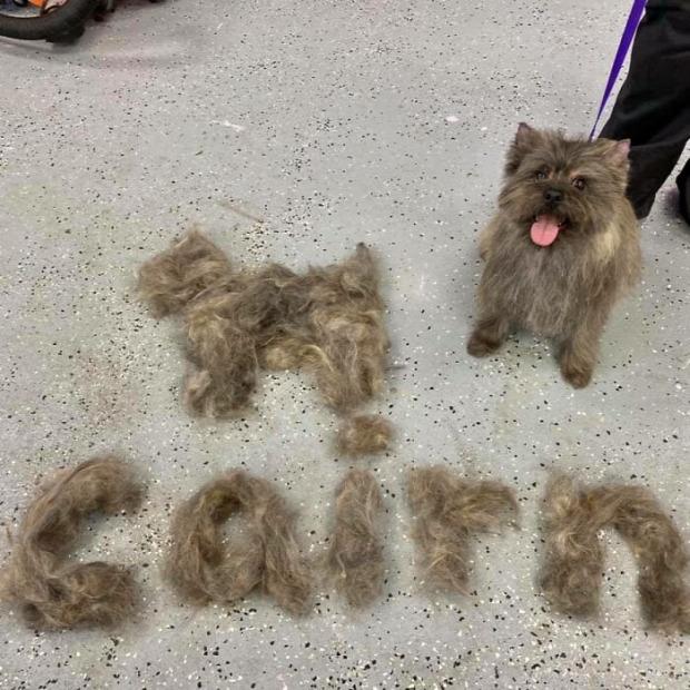 kutya macska szőr kefélés nyírás
