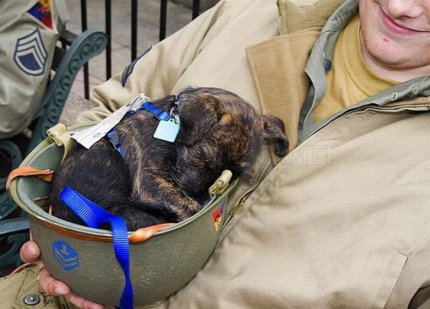 Isten állatkertje kutya katona