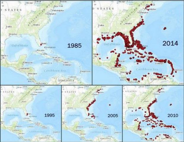 A világ érdekes ökológiai katasztrófa tűzhal