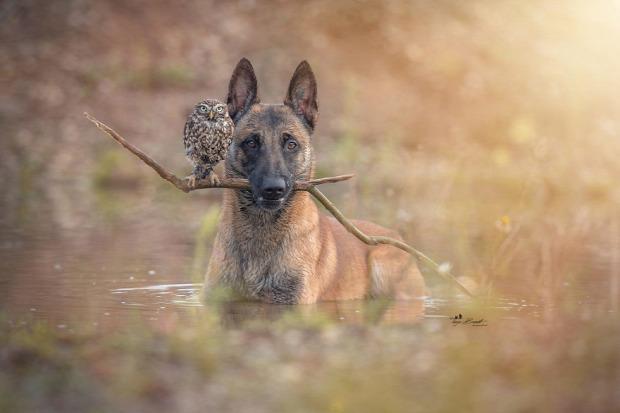 A világ érdekes kutya bagoly barát