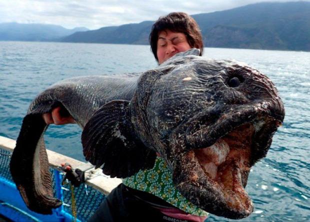 A világ érdekes hal szörny kreatúra