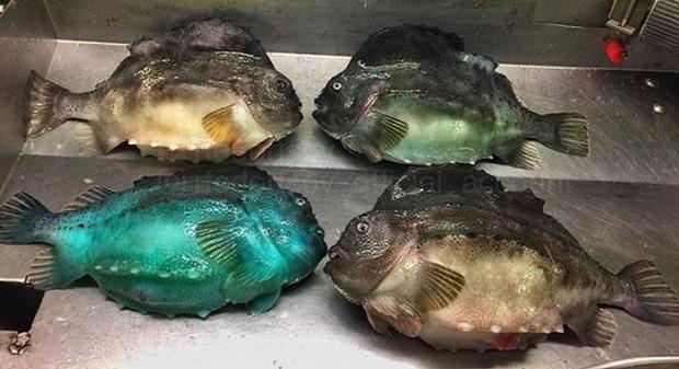 A világ érdekes tenger óceán mélység hal ritka ismeretlen