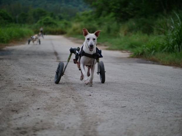 kutya menhely menedékhely Thaiföld svéd séf szakács